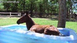Забавные лошадки смотреть видео прикол - 2:05