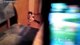 Смотреть Самый внезапный кот