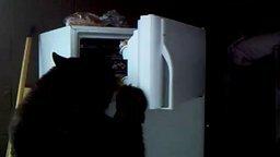 Смотреть Медведь хозяйничает в холодильнике