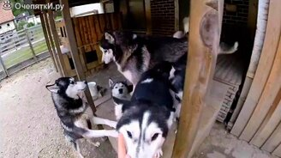 Собачье семейство смотреть видео прикол - 2:01