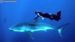 Блондинка и акула смотреть видео прикол - 1:12