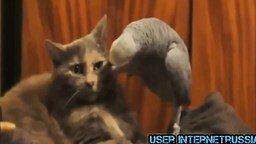 Смешные летние животные смотреть видео прикол - 6:30