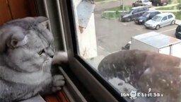Ленивый кот и голодный голубь смотреть видео прикол - 1:16