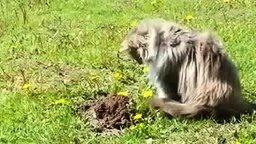 Смотреть Пушистый котяра против крота