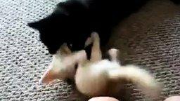 Смотреть Лисёнок и чёрная кошка