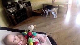 Смотреть Пёс носит малышу игрушки