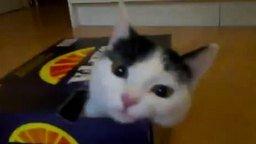 Самоупаковка кошки смотреть видео прикол - 2:20