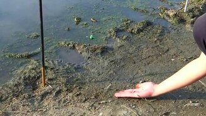 Смотреть Приручила жабу