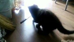 Смотреть Как занять кота на полчаса