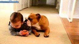 Смотреть Забавные животные и детишки