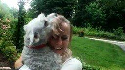 Смотреть Собака падает в обморок от счастья