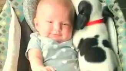Тёпленькое местечко возле малыша смотреть видео прикол - 0:15