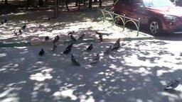 Смотреть Замершие голуби на улице