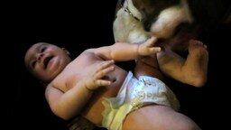 Смотреть Пёс щекочет ребёнка