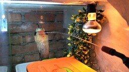 Смотреть Реакция кобры на струю воды