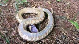 Смотреть Змея прикинулась мёртвой