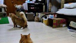 Смотреть Лазерно-кошачье безумие