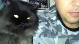 Демонический кот ласкается смотреть видео прикол - 0:54