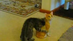 Смотреть Котёнок играет со стауэткой кота