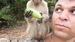 Нашествие обезьян на туристов смотреть видео прикол - 2:19