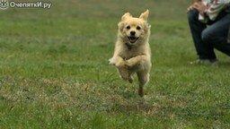 Смотреть Собака в прыжке и во время бега - замедление