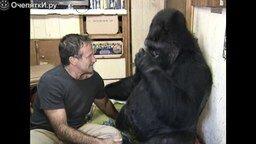 Робин Уильямс и горилла
