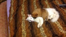 Смотреть Смешной щенок и терпеливый кот