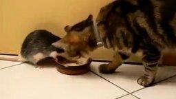 Настойчивая крыса и добрый котяра смотреть видео прикол - 0:39