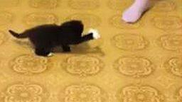 Смотреть Милейший чёрный котёнок
