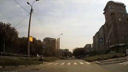 Культурный голубь-пешеход смотреть видео прикол - 0:18