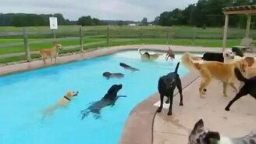 Смотреть Собачья тусовка у бассейна