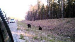 Смотреть Медвежата-попрошайки