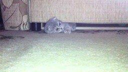 Смотреть Кошка, которая спит под диваном
