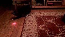 Смотреть Кот водит лазером сам себя