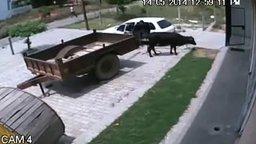 Безумцы крадут корову смотреть видео прикол - 0:58