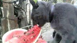 Кот, который любит арбузы смотреть видео прикол - 1:23
