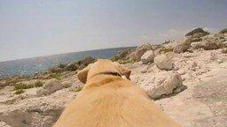 Смотреть Собака, обожающая купаться