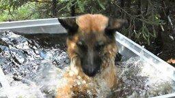 Смотреть Собачья радость от купания