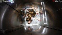Смотреть Ужастик с участием собаки-паука
