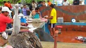 Смотреть Как непросто рыбу продавать