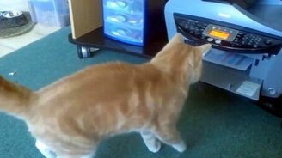 Подборка с сообразительными котами и кошками смотреть видео прикол - 4:26