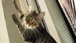 Смотреть Кошка крякает на птичек