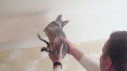 Смотреть Кот - замена мухобойки