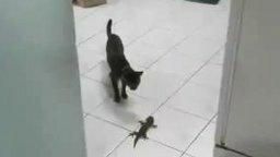 Кошка против геккона смотреть видео прикол - 0:07