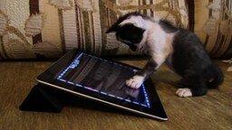 Котёнок, усыновлённый собакой смотреть видео прикол - 2:04