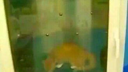 Устройство для мытья питомцев смотреть видео прикол - 1:37