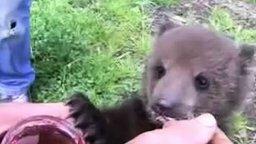 Смотреть Смешной медвежонок