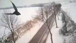 Охота сокола на ворона от первого лица смотреть видео прикол - 1:04