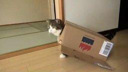 Кот, который обожает коробки смотреть видео прикол - 2:45