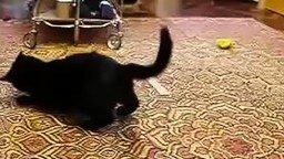 Смотреть Жёсткий бой белки и кошки